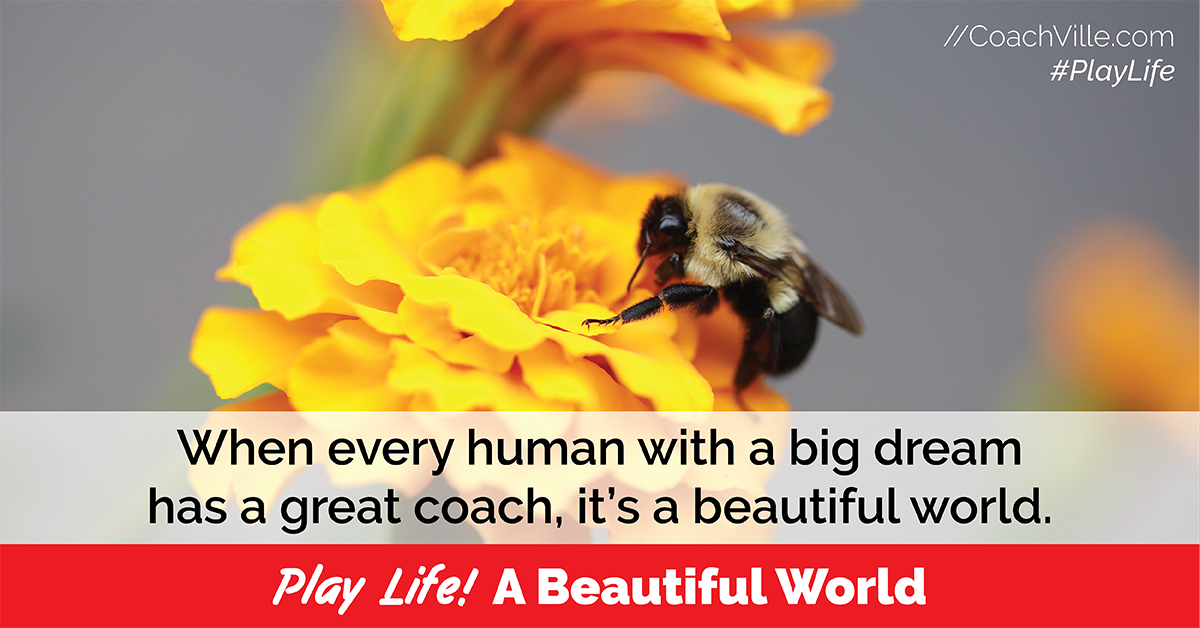 Play Life - 21a - A Beautiful World